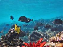 Naviguer au schnorchel avec les poissons tropicaux Images stock