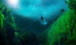 Naviguer au schnorchel dans l'eau douce Image libre de droits