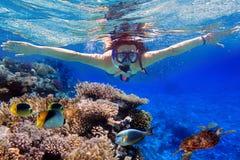 Naviguer au schnorchel dans l'eau tropicale de l'Egypte Photographie stock libre de droits