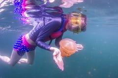 Naviguer au schnorchel dans les méduses Photo stock