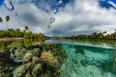 Naviguer au schnorchel en jardins et arc-en-ciel de récif coralien de Polynésie française images stock