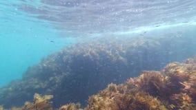 Naviguer au schnorchel en mer parmi les récifs avec des algues et des poissons et des méduses dans peu profond clips vidéos