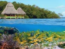 Naviguer au schnorchel en mer tropicale Photos stock