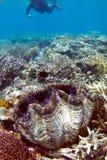 Naviguer au schnorchel sur le récif coralien Image libre de droits