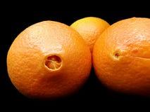 Navlar av nya apelsiner Royaltyfri Fotografi