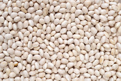 Navy bean background Stock Photography