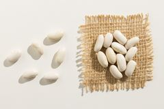 Navy Bean legume. Close up of grains spreaded over white table. Phaseolus vulgaris is scientific name of Navy Bean legume. Also known as Haricot, Pearl Bean and Royalty Free Stock Image