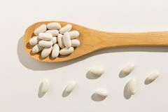 Navy Bean legume. Healthy grains on a wooden spoon. White background. Phaseolus vulgaris is scientific name of Navy Bean legume. Also known as Haricot, Pearl stock image