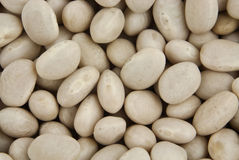 Navy beans Stock Photography