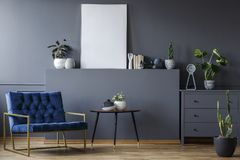 Navy blue armchair next to table in grey flat interior with mockup of poster and plants. Concept stock photography