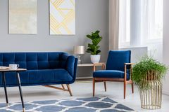 Navy blue armchair standing next to sofa in real photo of bright living room interior with fresh plants, modern art paintings and. Window with drapes royalty free stock photos