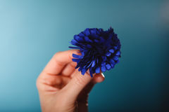 Navy blue flower hairpin in female hand Stock Images