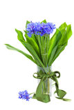 Navy corn flowers bouquet in vase. Isolated on white background Stock Images