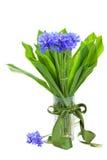 Navy corn flowers bouquet in vase Stock Images
