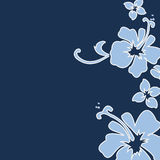 Navy hibiscus. Navy and light blue hisiscus Royalty Free Stock Images