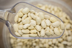 Navy white pea beans Stock Photography
