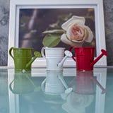 Nawadniać róży pic zdjęcie stock