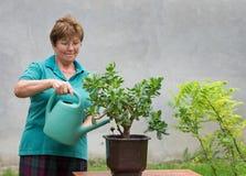 Nawadniać rośliny Zdjęcia Stock