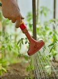 nawadniać rośliny w ogródzie z światłem słonecznym Fotografia Stock