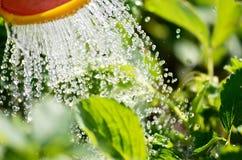 nawadniać rośliny w ogródzie z światłem słonecznym Zdjęcie Stock
