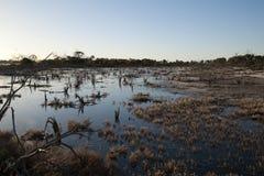 Nawadnia krawędź słone jezioro w późnego popołudnia świetle obrazy stock