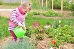 Nawadniać kwiaty Zdjęcie Royalty Free