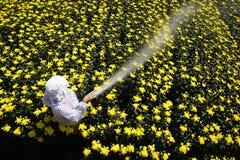 Nawadniać kwiaty Obraz Stock