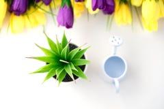 Nawadnia kwiaty na czas fotografia stock
