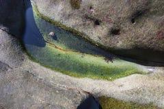 Nawadnia wychwytanego w skale jak mini staw z skorupy i dennej rośliny utrzymaniem w nim obrazy stock