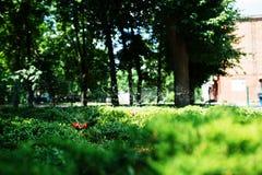 Nawadniać zielonej trawy na gazonie Obrazy Royalty Free