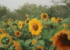 Nawari blommaträdgård arkivfoto