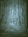 Nawiedzający Lasowych duchów straszny dziwny zdjęcie royalty free