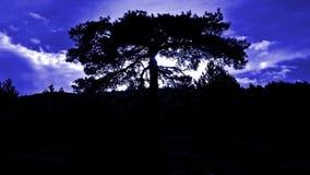 nawiedzony drzewo zdjęcia stock