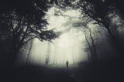 nawiedzony lasu zdjęcie stock