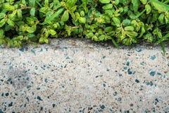 Nawierzchniowa tekstura betonowa podłoga obok świrzepy i trawy zdjęcia royalty free