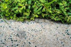 Nawierzchniowa tekstura betonowa podłoga obok świrzepy i trawy zdjęcia stock