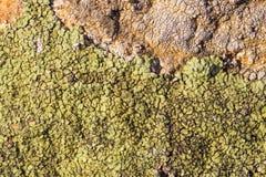 Nawierzchniowa tekstura na dennym kamieniu Wysuszeni krakingowi przyrosty na t zdjęcie stock