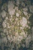 Nawierzchniowy grzyb na drewnianych abstrakcjonistycznych wzorach Fotografia Stock