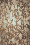 Nawierzchniowy grzyb na drewnianych abstrakcjonistycznych wzorach Obraz Stock
