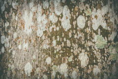 Nawierzchniowy grzyb na drewnianych abstrakcjonistycznych wzorach Fotografia Royalty Free