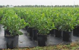 nawodnione rośliny Obrazy Stock