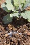 Nawozowy warzywo w ogródzie zdjęcie royalty free