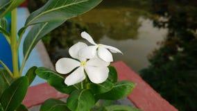Nayantara Royaltyfri Bild