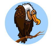 Nazar ptak Zdjęcie Royalty Free