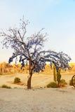 Nazars turkiska berlock för ont öga på trädet Goreme cappadocia kalkon arkivfoton