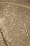 Nazca,秘鲁-蜘蛛线路和Geoglyphs  库存图片