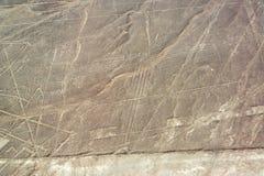 Nazca allinea Geoglyphs Immagine Stock
