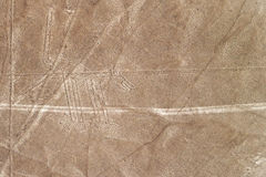 Nazca allinea il cane Immagini Stock