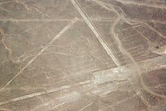 Nazca allinea il pappagallo Fotografia Stock