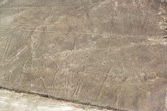 Nazca allinea il pellicano Immagini Stock Libere da Diritti